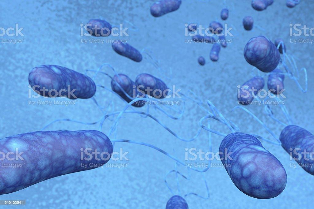 Escherichia Coli (E.  Coli.) - foto de stock