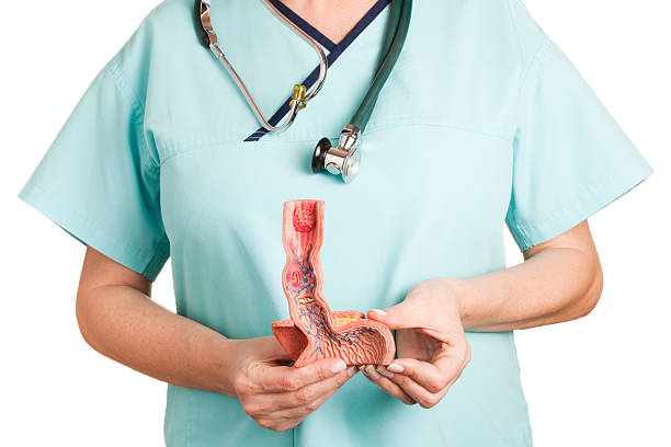 esophagus illnesses - esophagus stock photos and pictures