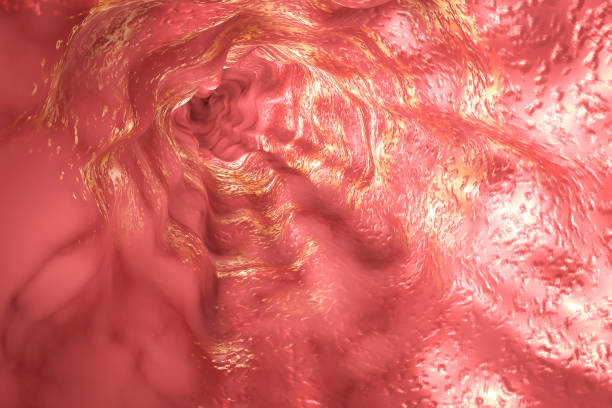 esophagus mucosa and esophageal sphincter - esophagus stock photos and pictures