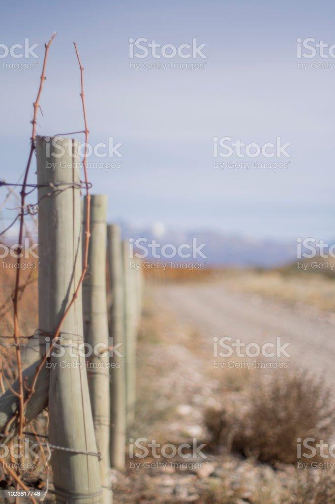 Espaldero - foto de stock