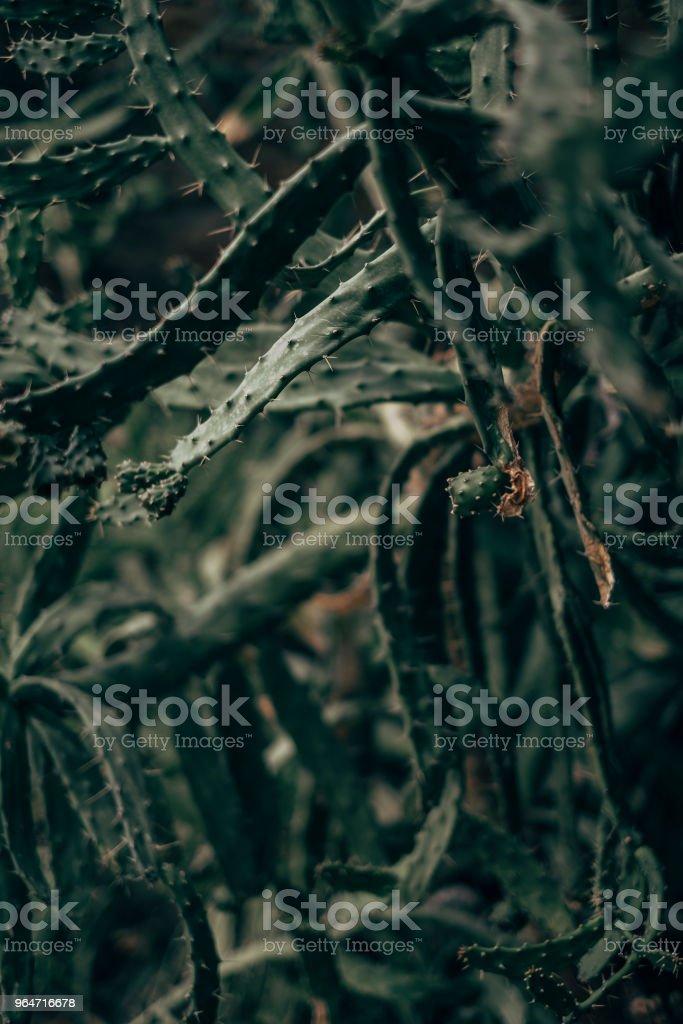 espinhos royalty-free stock photo