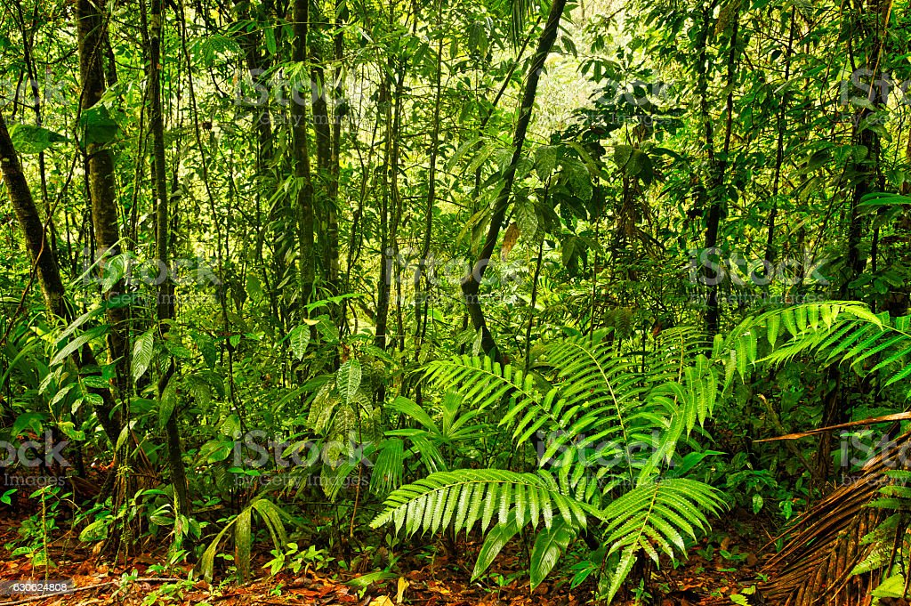 Esquinas Rain Forest, Costa Rica stock photo