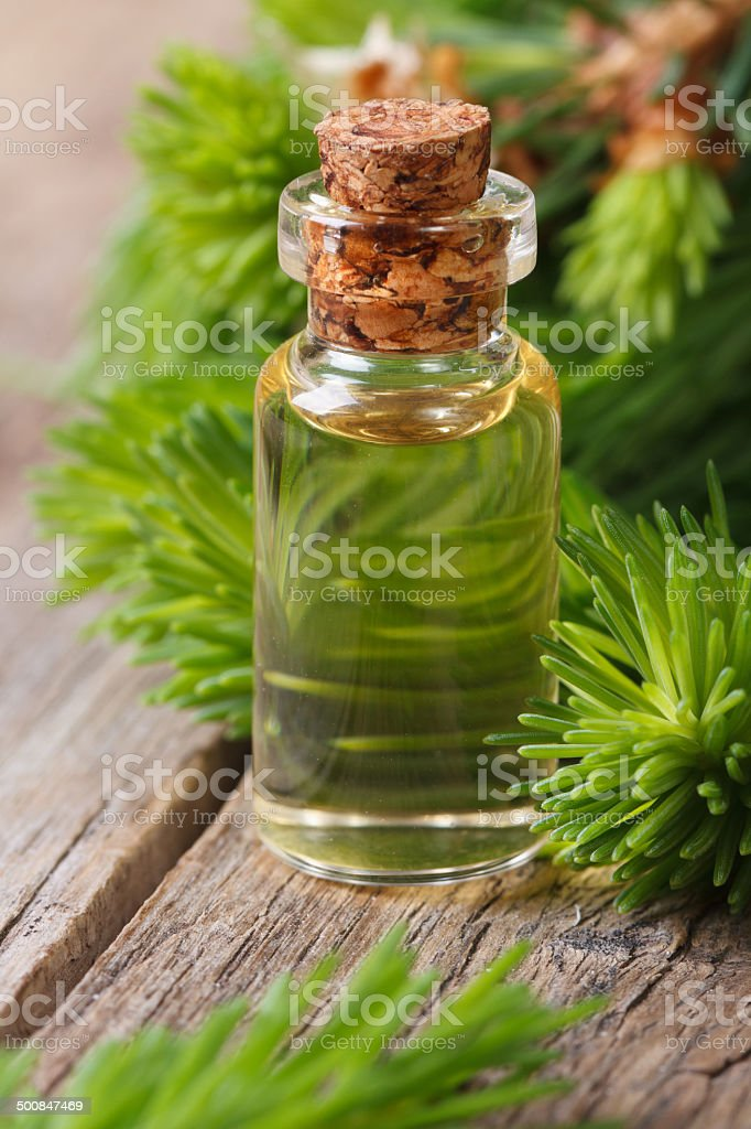 Essential aromatic oil spruce closeup vertical stock photo