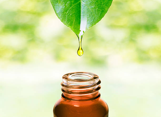 essential oil dropping from leaf .aromatherapy. - naturopathy stock photos and pictures