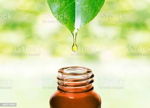 Photo of Essential oil dropping from leaf .Aromatherapy.