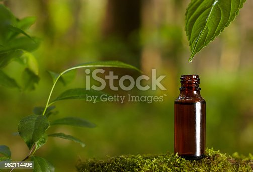 istock Essential oil falling from green leaf. 962114496