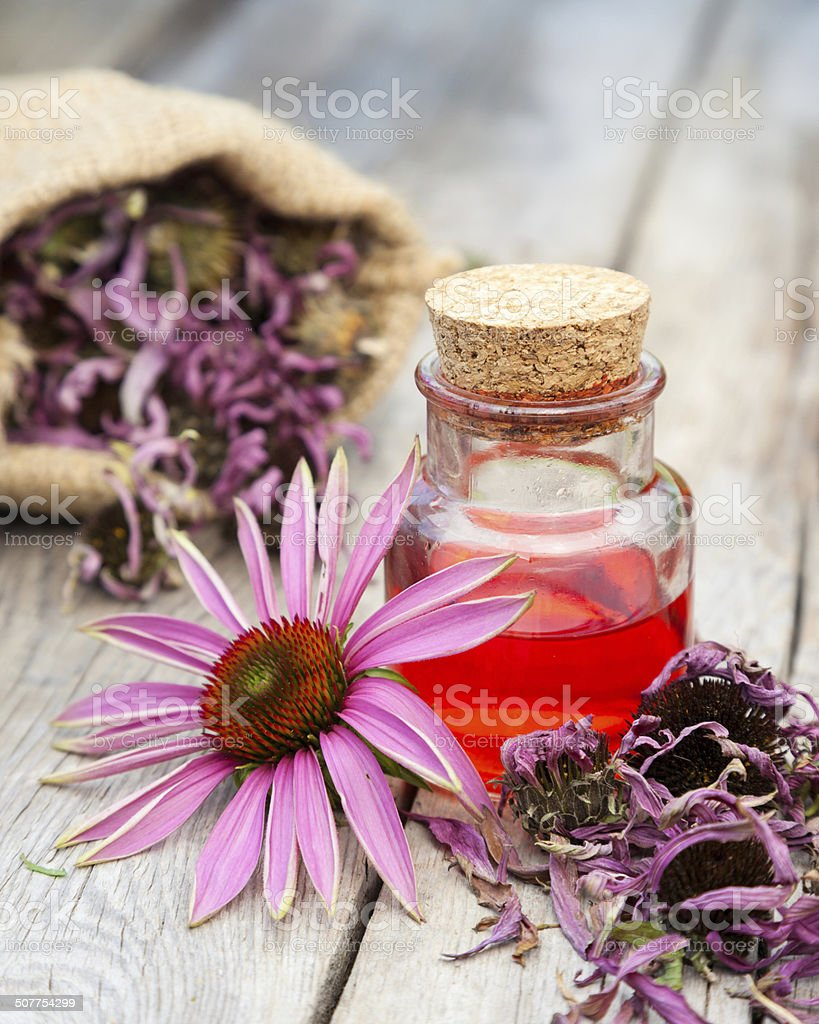 essential oil in glass bottle and coneflower stock photo