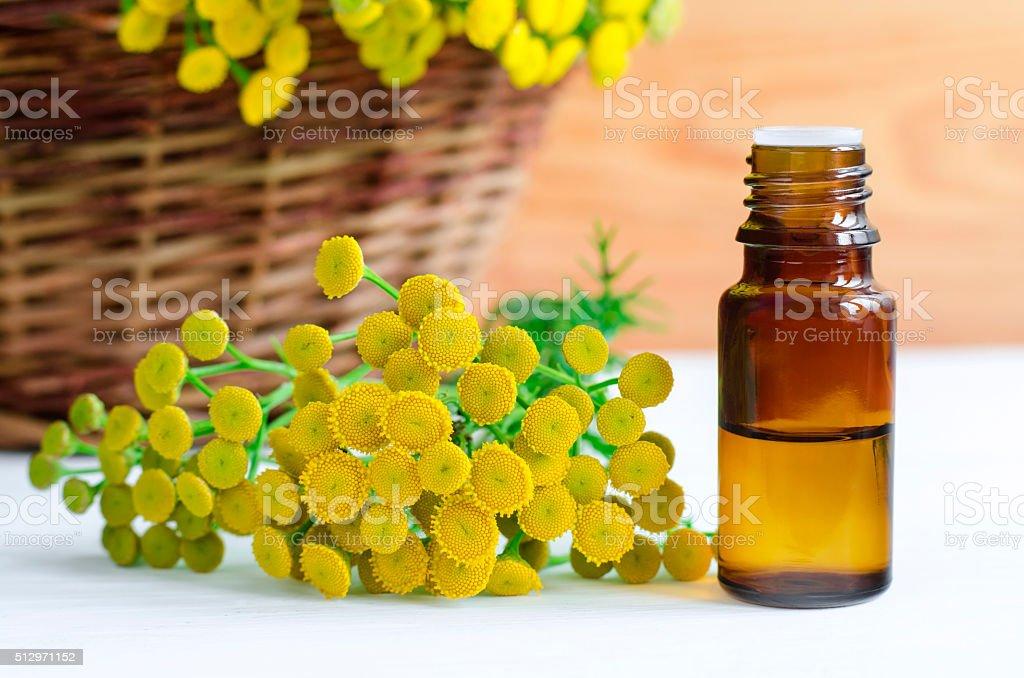 Essential tansy oil stock photo