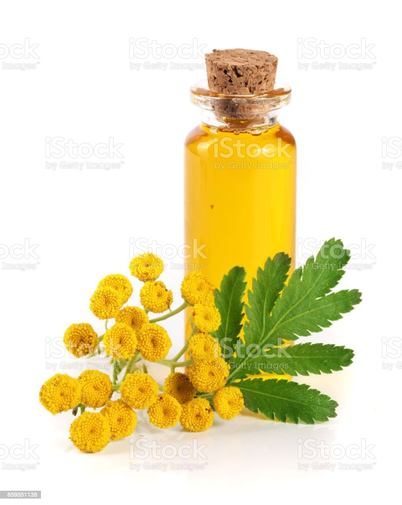 essential tansy oil with flowers and leaf isolated on white background stock photo