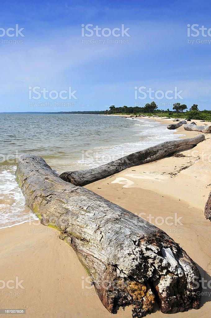 Estuaire Province, Gabon: old logs on a tranquil beach stock photo