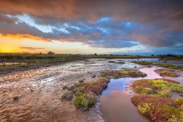 estuary marshland at sunrise - estuário imagens e fotografias de stock