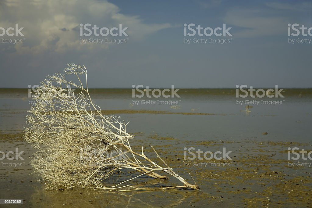 Estuary royalty-free stock photo