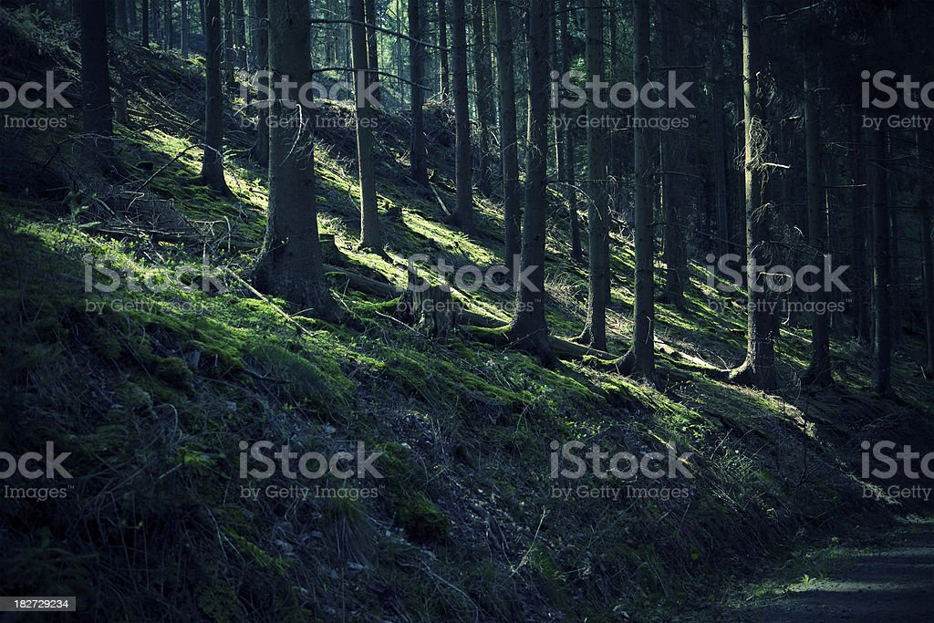 Etheral reflections in the woods Stripes of light and shadow in the forest. Dark Stock Photo
