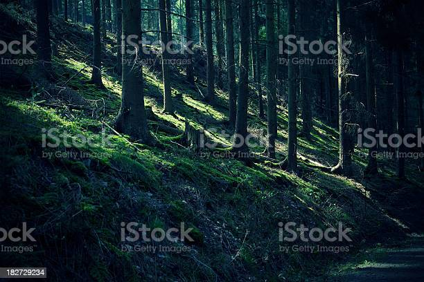 Etheral Reflections In The Woods Stock Photo - Download Image Now