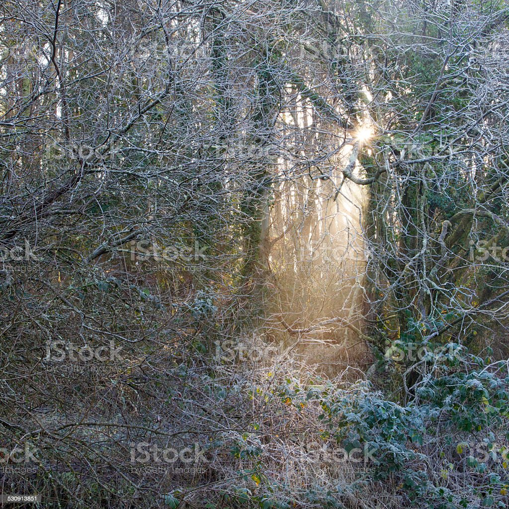 Ethereal Sunlight stock photo