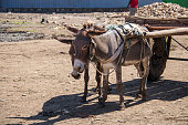 A pair of donkeys pull a cart in a rural part of southern Ethiopia.