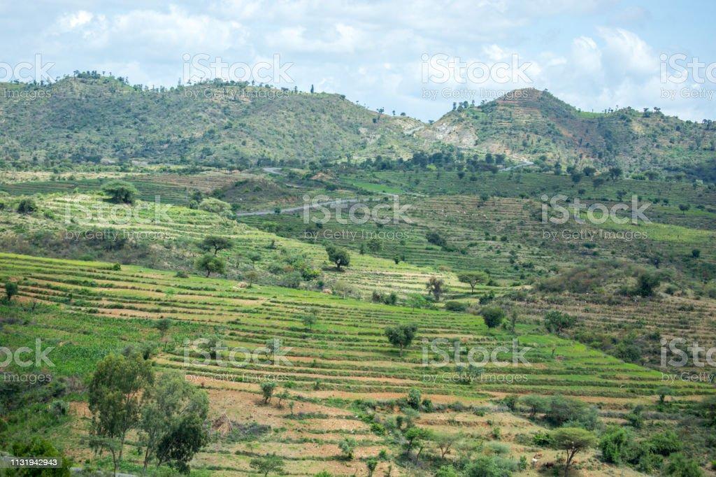 Etiopía Cultivo En Terrazas Foto De Stock Y Más Banco De