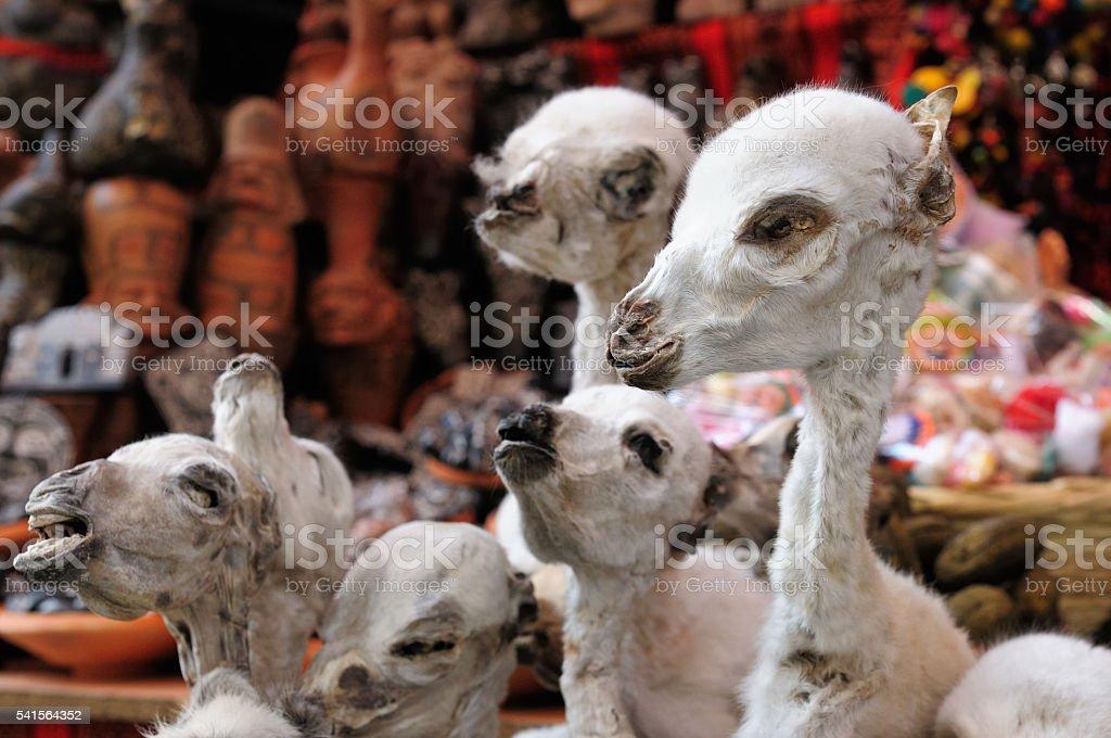 Ethnic Bolivia stock photo