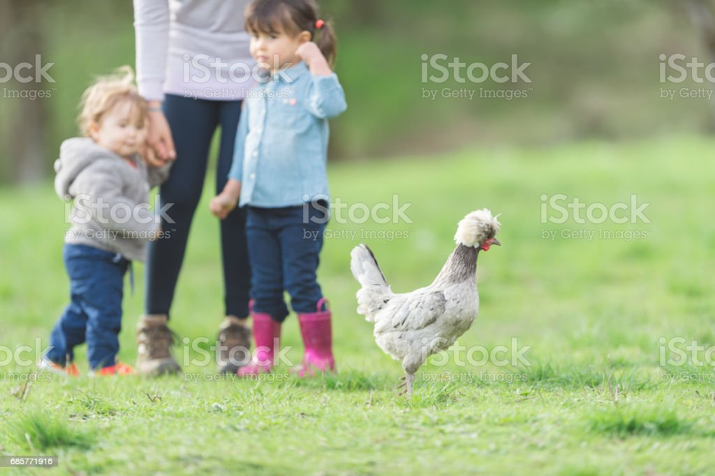 Ethnic mom  walks outside on farm with her young children royalty-free stock photo
