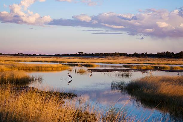 Etoscha Landschaft stock photo
