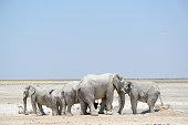 Etosha elephants in Etosha, Namibia