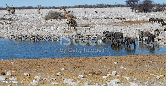 A group of safari animals at a waterhole in Etosha National Park, Namibia