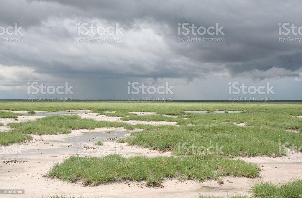 Etosha NP, Rain in Green Savannah, Cloudscape, Rainy Season, Namibia stock photo