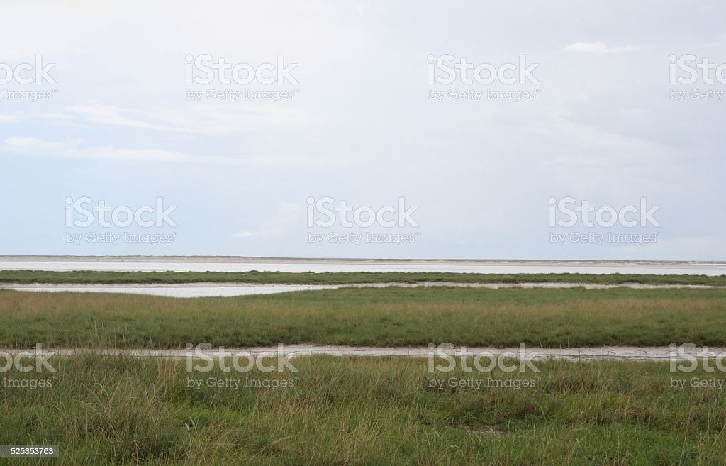 Etosha Salt Pan, Green Grassland, Cloudscape, Wet Season, Namibia, Africa stock photo