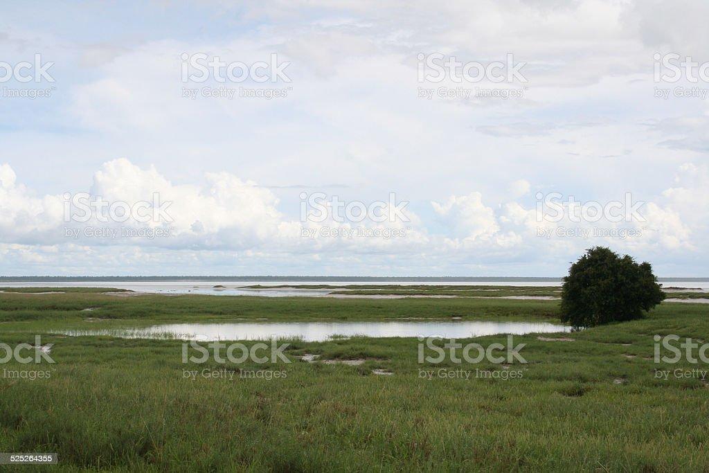 Etosha Salt Pan, Green Savannah, Cloudscape, Rainy Season, Namibia stock photo