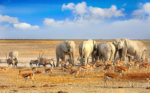 Etosha waterhole teeming with animals - Namibia – Foto