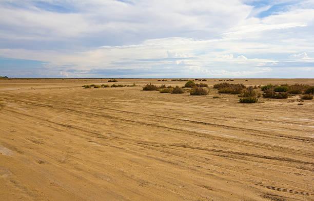 Eucaliptus beach - foto de stock