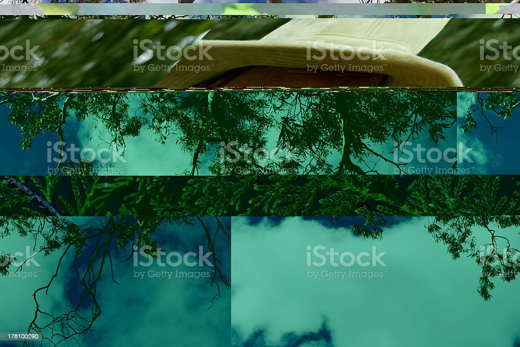 Eucalypt branch and cloudy blue sky stock photo