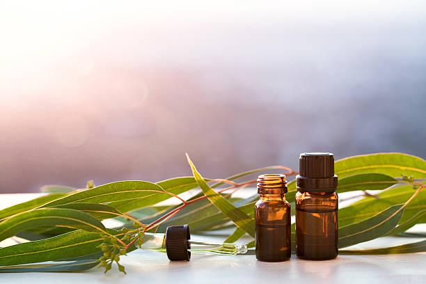 eucalyptus aromatherapy essential oils in bottles - eucalyptus tree stock photos and pictures