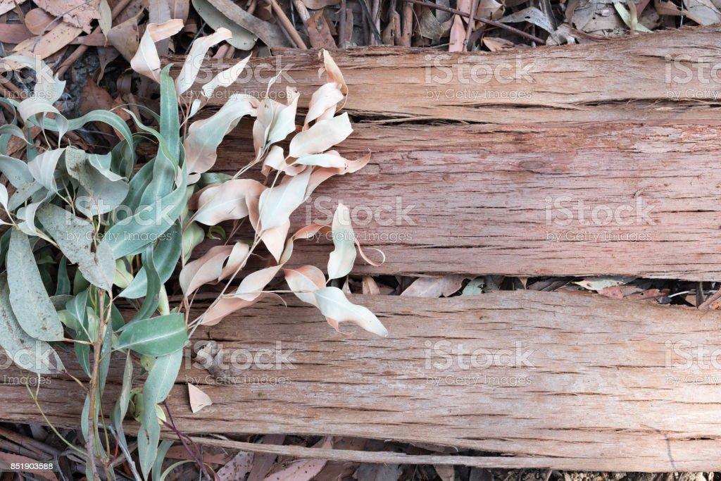 Eucalyptus bark and leaves