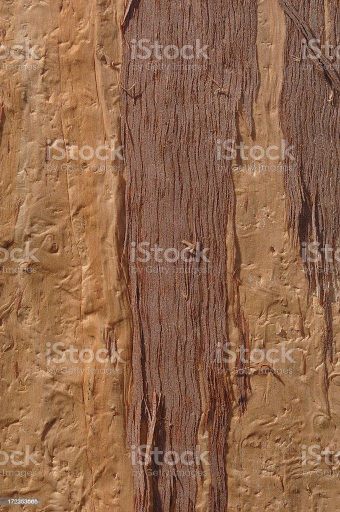 Eucalyptus Bark royalty-free stock photo