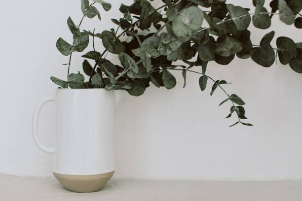 Eucalyptus bouquet in vase on white background floral minimal picture id998007806?b=1&k=6&m=998007806&s=612x612&w=0&h=cri062po6gursmypgfe2triy h4crdur j0ageqhpnc=