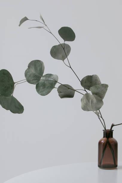 Eukalyptus-Niederlassung in Vase mit weißen Wand – Foto