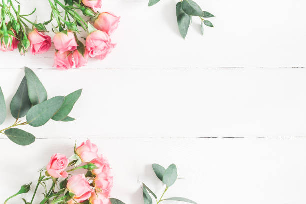 Eucalyptus branches and pink rose flowers. Flat lay, top view stock photo