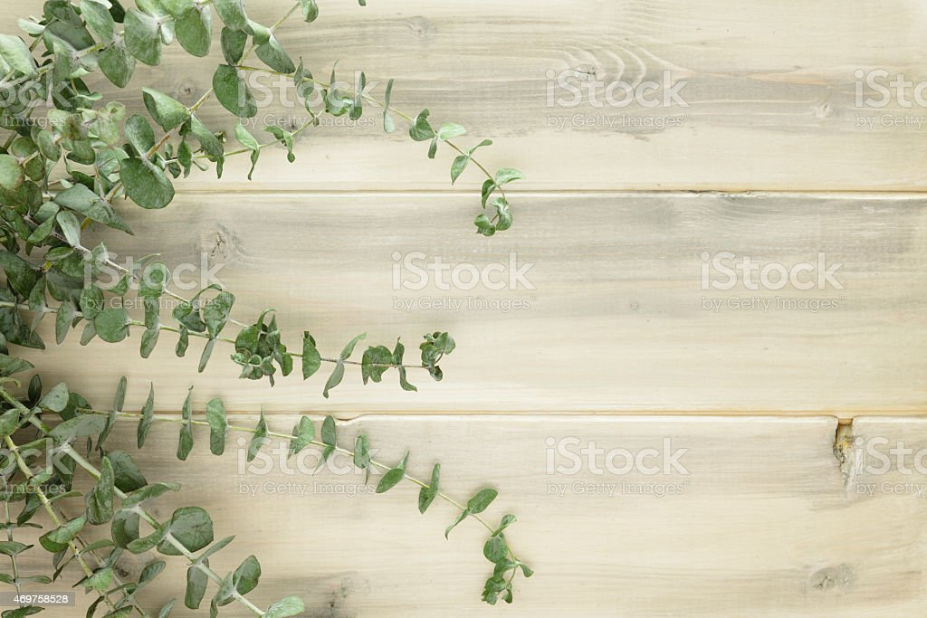 Eucalyptus Branches on Rustic White Wood stock photo