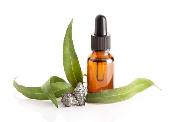 Eucalyptus essential oil isolated on white background stock photo