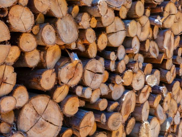 Eucalyptus fire wood trunk piled up texture - pattern stock photo