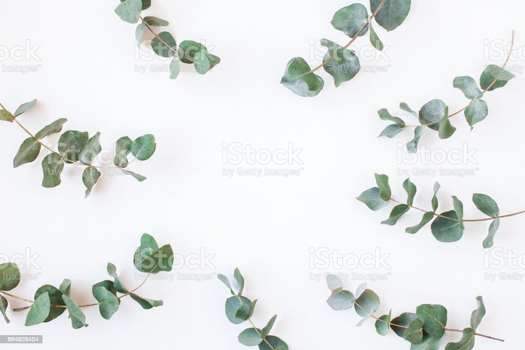 Eucalyptus. Frame made of eucalyptus branches. Flat lay, top view stock photo