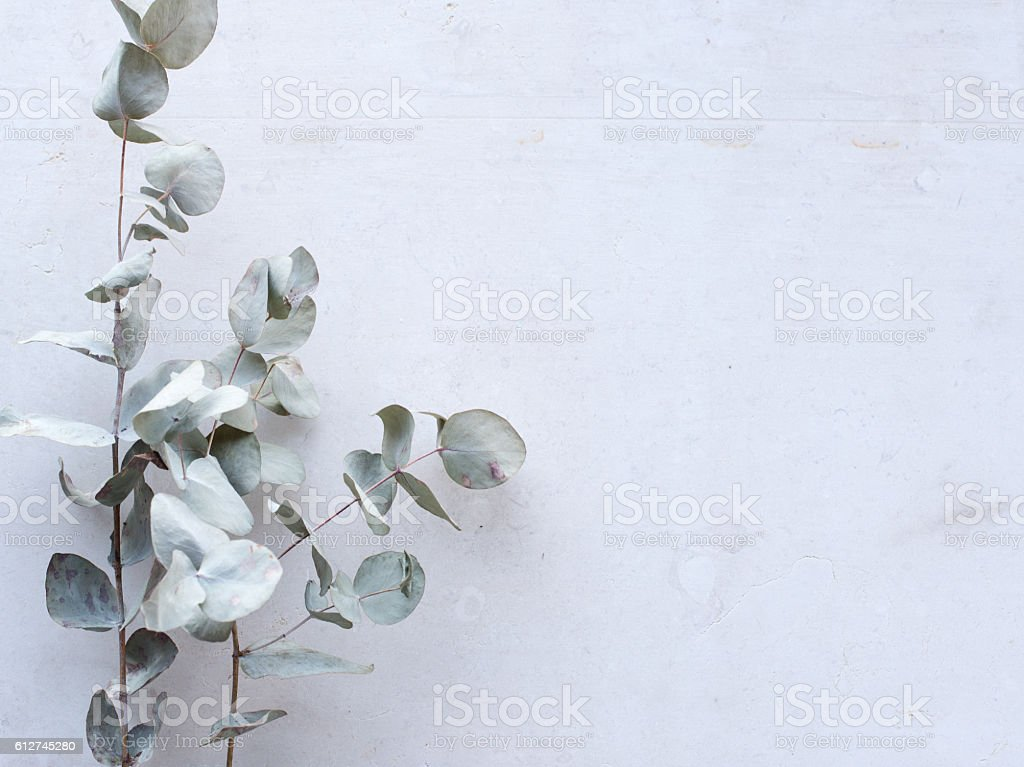 Eucalyptus leaves against limestone from above stock photo