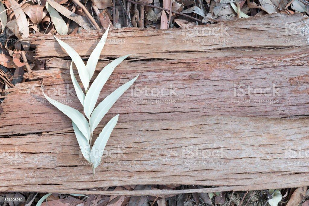 Eucalyptus leaves and bark