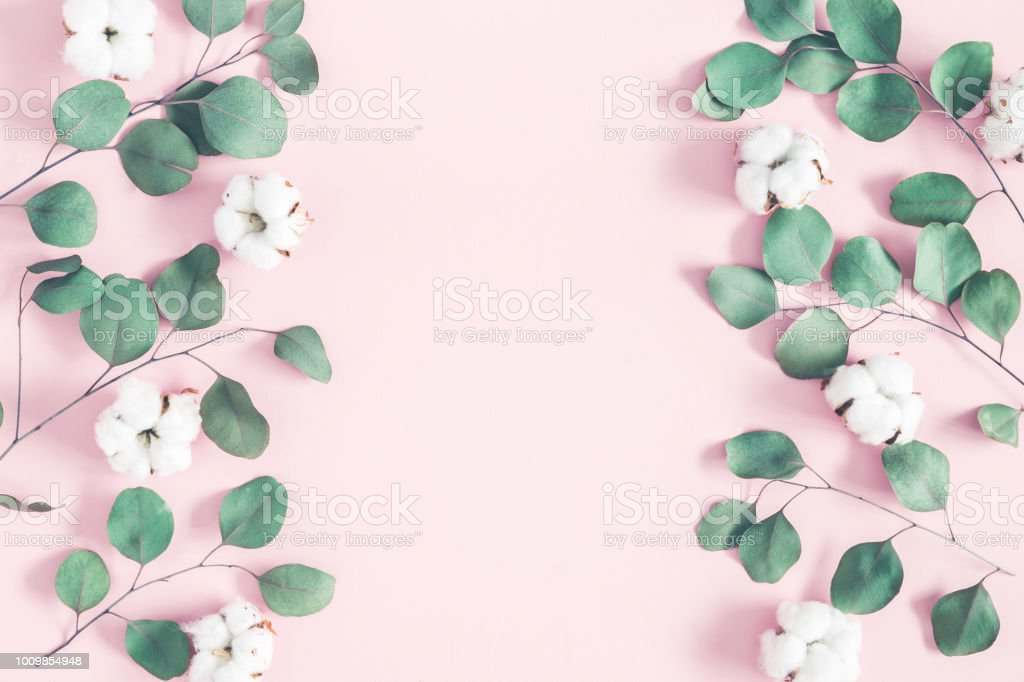 Flowers composition. Eucalyptus leaves and cotton flowers on pastel...