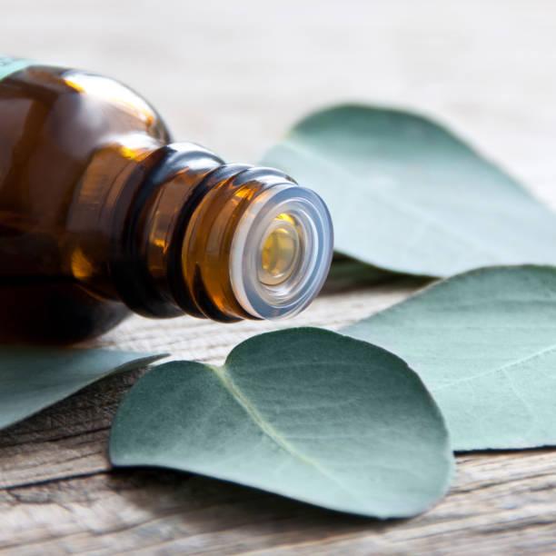 Eukalyptus-Blätter und Öl hautnah – Foto