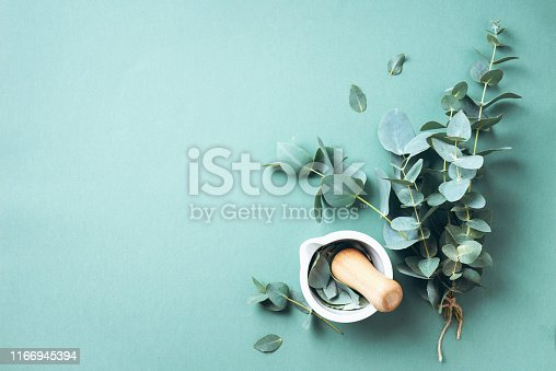 Eucalyptus leaves and white mortar, pestle. Ingredients for alternative medicine and natural cosmetics. Beauty, spa concept.