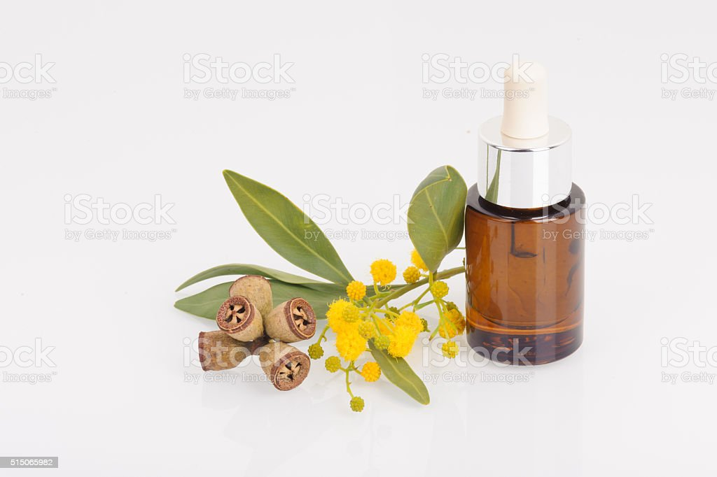 Eucalyptus leaves, flowers and fruit, Eucalypt oil stock photo