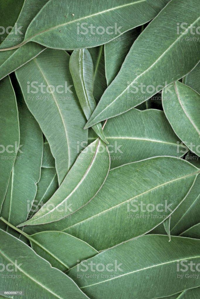 Eucalyptus Leaves Full Frame Background Top View stock photo