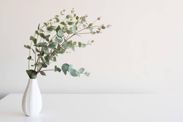 Eucalyptus leaves in small white vase on table stock photo